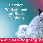 Ein neuer Hundeblog – Herzlich Willkommen