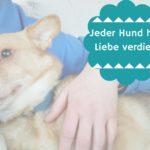Die Geschichte eines ungeliebten Hundes