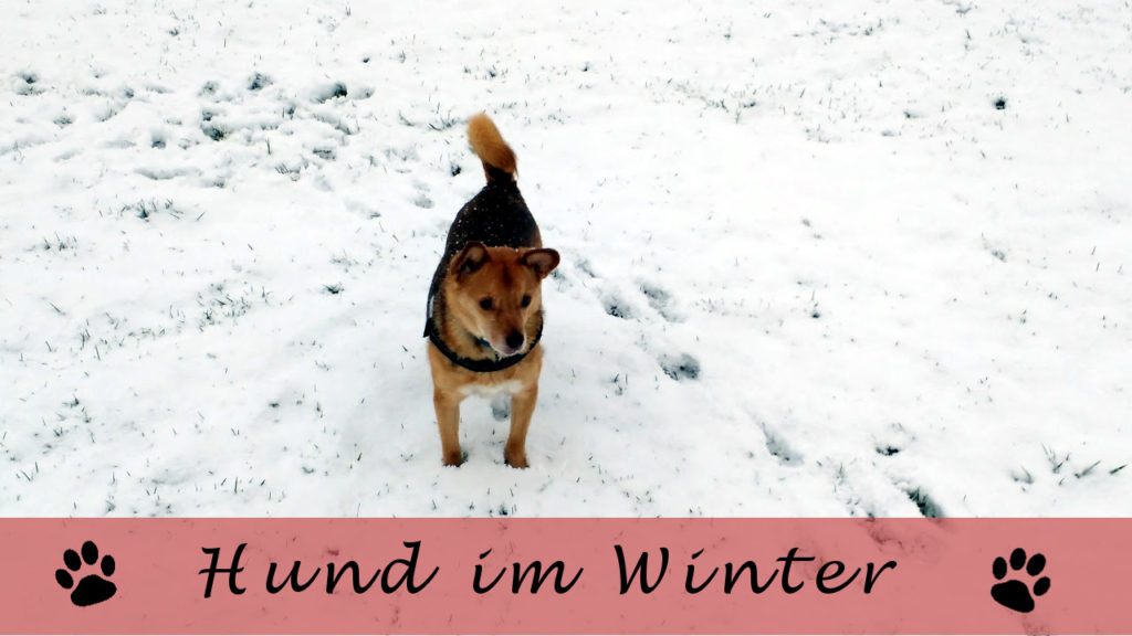 Hund im Winter