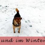 So bleibt der Hund im Winter gesund