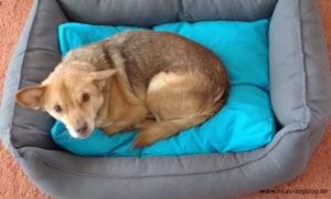 Bobby in seinem geliebten Hundebett