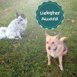 Liebster-Award: 10 Fragen, unsere Antworten