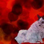 Blutarmut beim Hund Teil 2: Ursache Autoimmunerkrankung