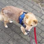 Buchrezension: Hab keine Angst mein Hund von R.C. Franck/M.Grauss