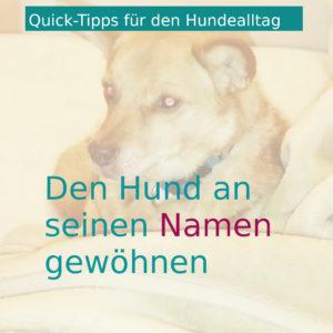 Hund an Namen gewöhnen
