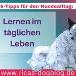 Quick-Tipps für den Hundealltag: Lernen im täglichen Leben