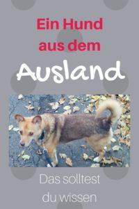 Hund aus dem Ausland