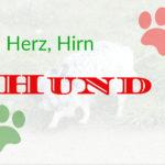 Buchrezension: Herz, Hirn, Hund von Thomas Riepe