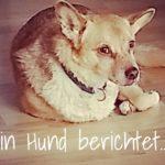 Tierkommunikation - Ein Hund berichtet...