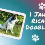 Hurra! – Ricas Dogblog wird ein Jahr!