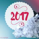 Meine Hunde, mein Blog und ich: Das war 2017