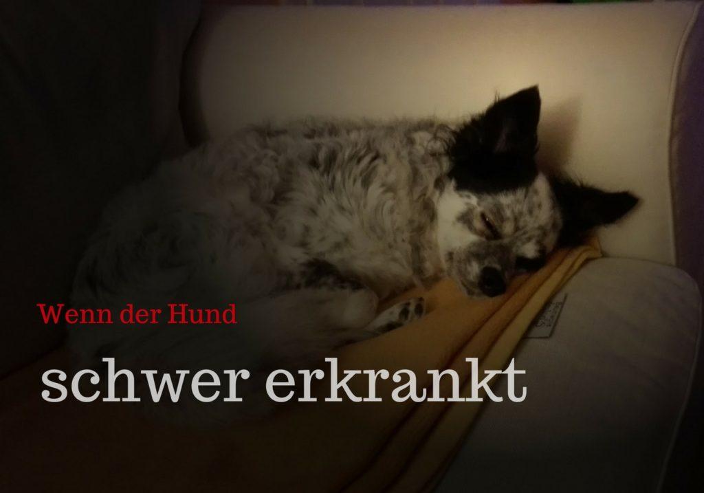 Wenn Dein Hund Schwer Erkrankt So Wirst Du Leichter Damit