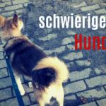 Schwieriger Hund: Mit positivem Training zum Erfolg