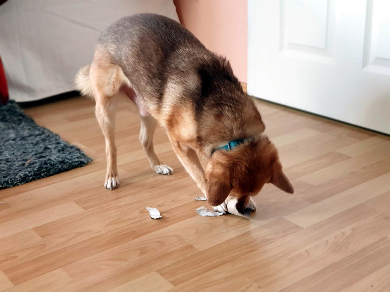Hund spielt mit Papprolle