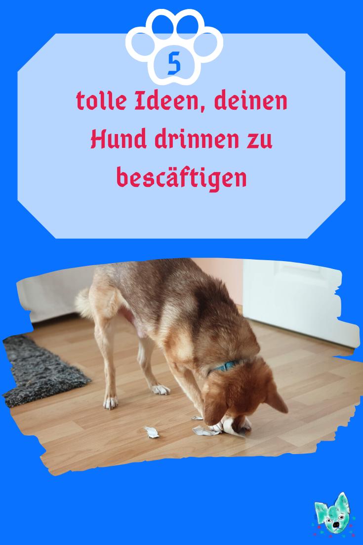 Beschäftigung für den Hund
