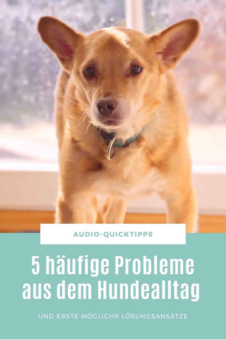 Probleme mit Hund
