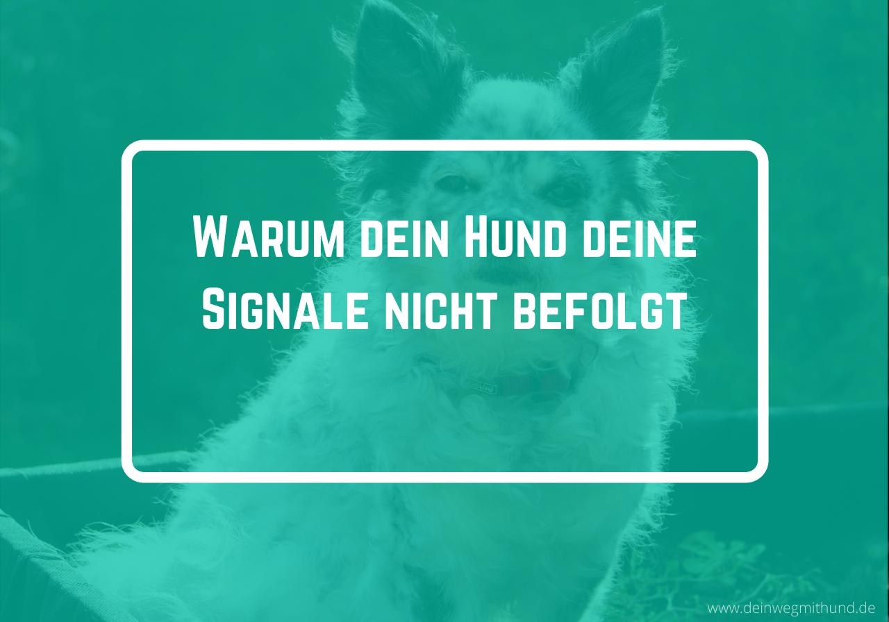 Hund befolgt Signale nicht
