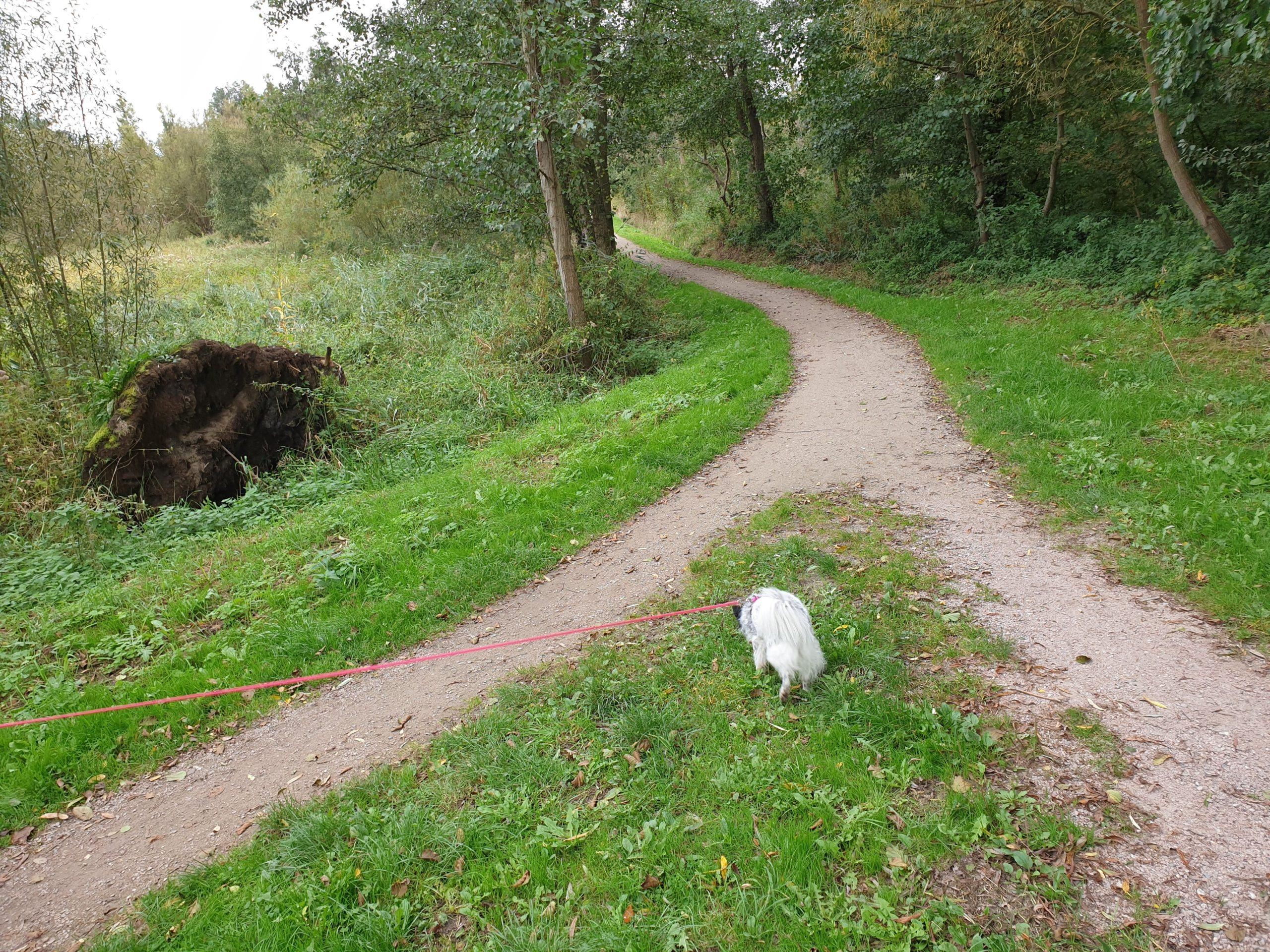 Hund schnüffelt am Weg